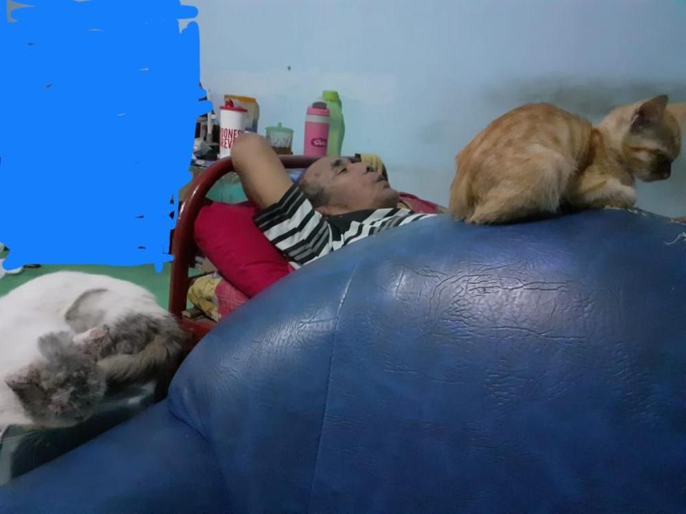 Bapak & Kucing-kucing